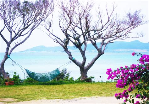 Free Images : sea, tree, grass, branch, blossom, meadow