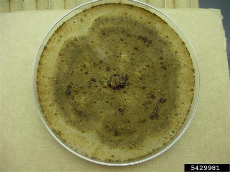 Rhizoctonia damping-off, blight and rot (Rhizoctonia