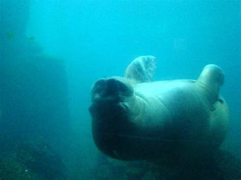 New York Aquarium (Brooklyn) - All You Need to Know Before