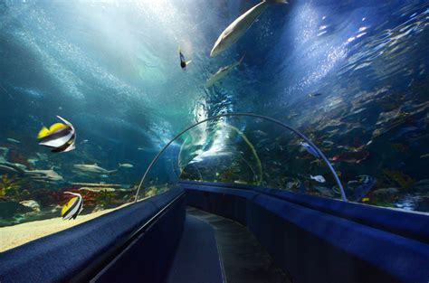Largest and Best Aquariums in Europe 2018 (Top 10