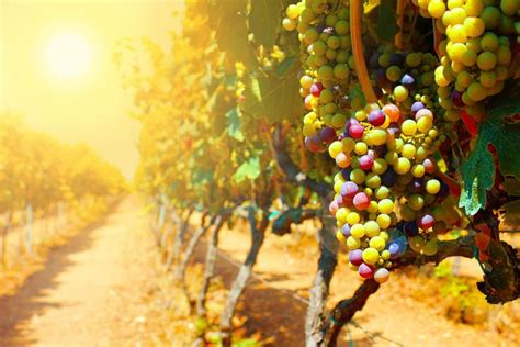 The Parable of the Workers in the Vineyard – Grace thru faith