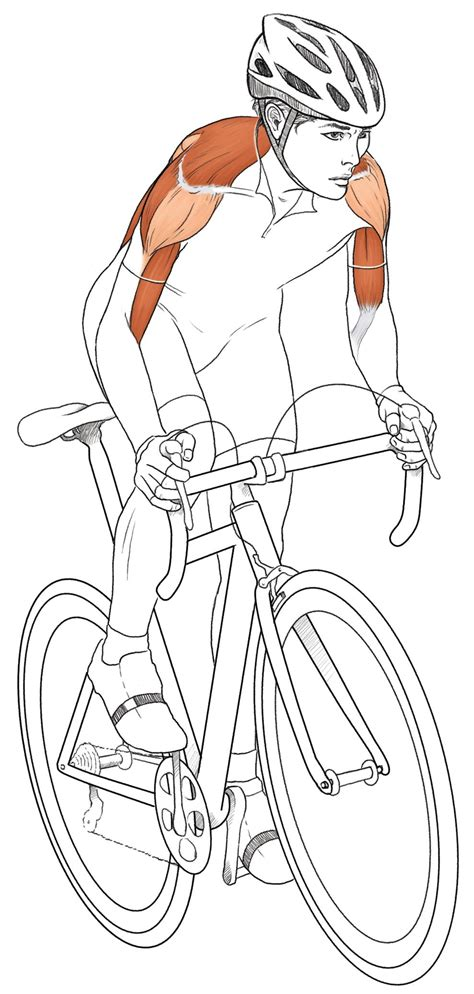 Cycling Anatomy Depicted in New Book: Illustrations Show