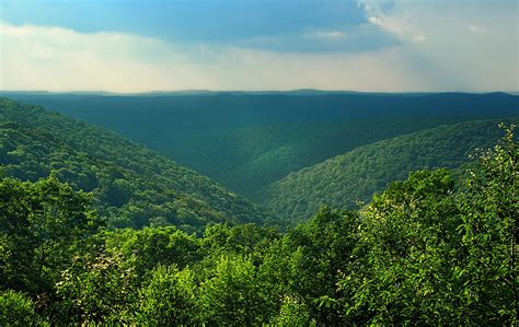 Adaptation Planning and Practices for Pennsylvania Forests